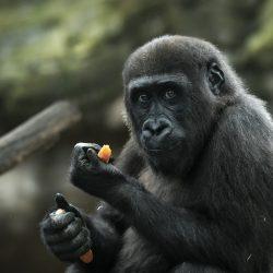 Descuento en el Zoo Club